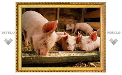 В колонии под Тулой обнаружен свинарник с нарушениями