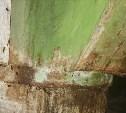 Тараканы оккупировали многоэтажку в Туле
