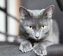 Пандемия коронавируса: как защитить домашних животных?
