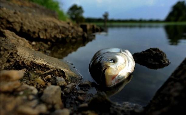 В Ленинском районе незаконный спиртзавод загрязняет местный пруд