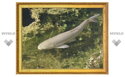 В водохранилище под Тулой запустили рыбу