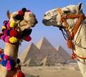 Россиян освободили от визового сбора при въезде в Египет