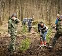 «Ясная Поляна» приглашает волонтеров для высадки ёлок