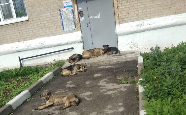 В Новомосковске бродячие собаки искусали школьницу