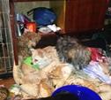 При расследовании нападений в Туле и Калуге полиция задержала серийных похитителей животных