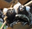 Тульский экзотариум приглашает на каникулы с обезьянками
