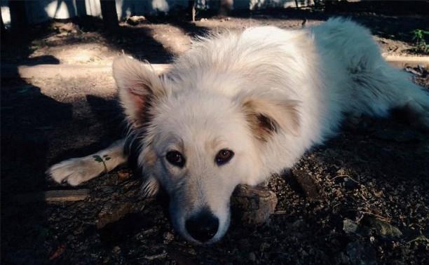 Московские журналисты ищут хозяев для собаки, принадлежащей убитой на Косой Горе семье