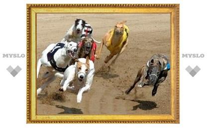 В Туле борзые собаки устроят гонку за искусственными зайцами