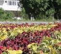 Евгений Авилов поручил усилить работу по озеленению Тулы и лучше поливать деревья