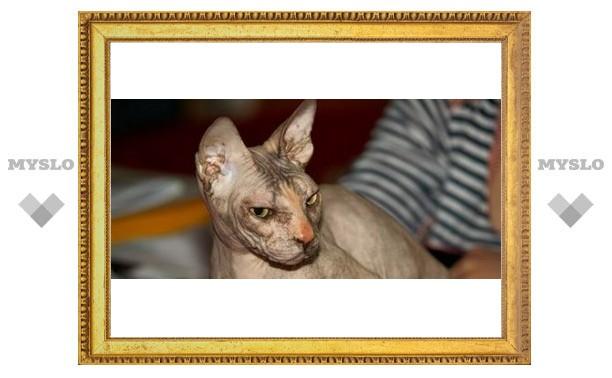 В Тулу привезли кошку-гоблина