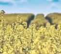 В Тульской области собран рекордный урожай рапса