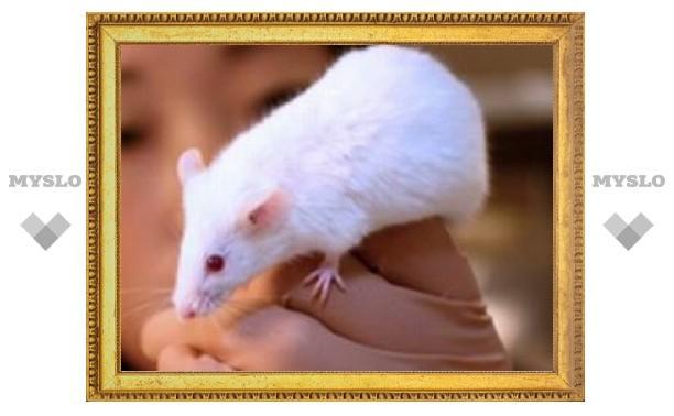 Китайские ученые вырастили мышей из клеток кожи