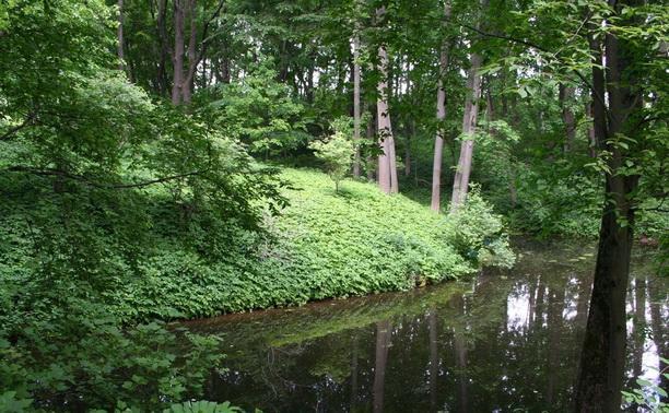 В начале августа туляков не пустят в леса области