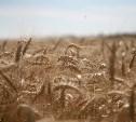 Зерновой союз признал использование фуража при выпечке хлеба