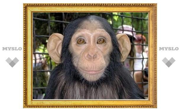 В Туле откроется зоопарк