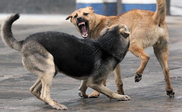 В Щекино мужчину насмерть загрызли бродячие собаки