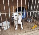 Делать мир добрее: тульские волонтеры привезли подарки в приют для бездомных животных