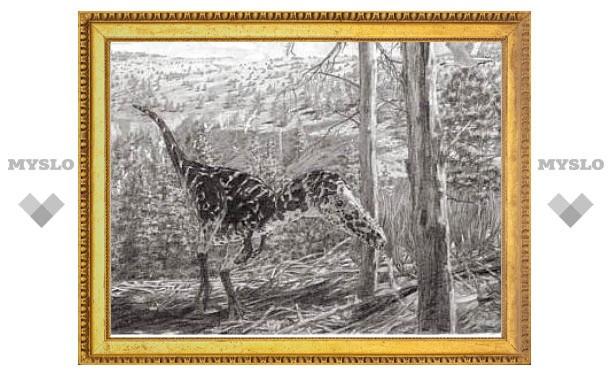 У коренастых тираннозавров нашелся грациозный родственник