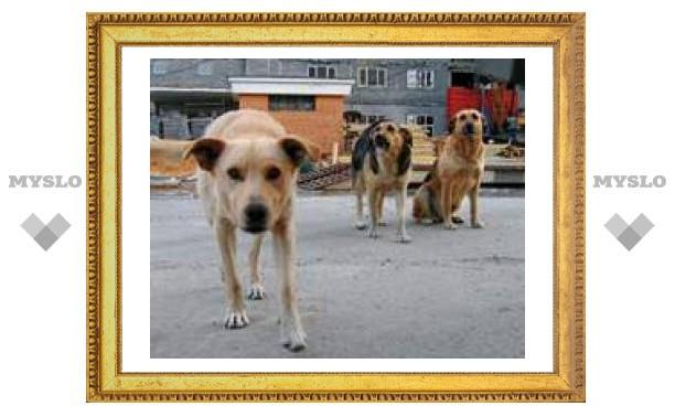 Пожалуйтесь на бродячих собак!