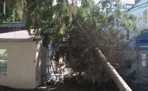 Скандинавский циклон в Тульской области: последствия