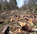 С начала года в Тульской области возбуждено 12 уголовных дел за незаконную вырубку деревьев