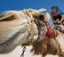 Туроператоры: Зимой российские туристы отправятся в Египет, Турцию и Сочи