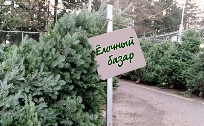 В Новомосковске цыганка незаконно торговала ёлками