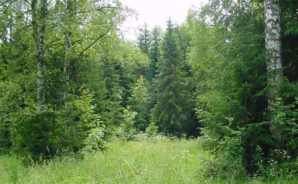 В лесу под Тулой заблудилась пенсионерка
