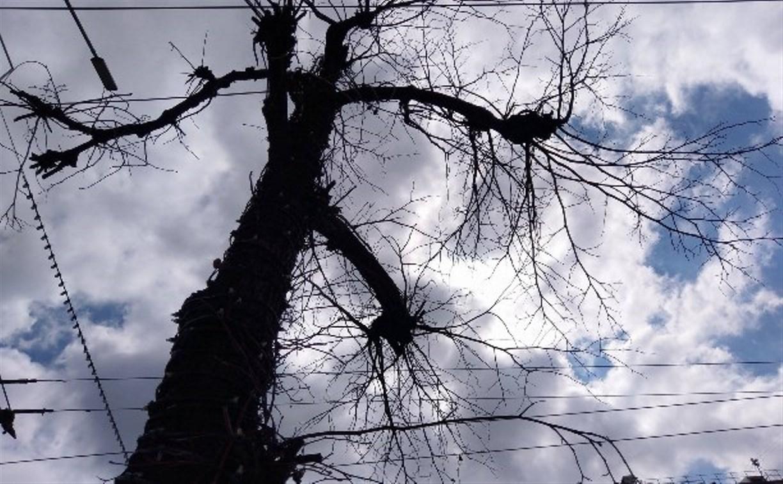 Что с деревьями на проспекте Ленина в Туле?