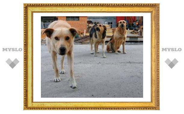 В Тульском парке душили щенков?