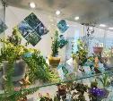 В Тульском экзотариуме рассказали, какие растения обеззараживают воздух в доме