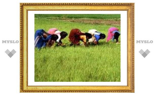 Россия прекращает импорт индийского риса
