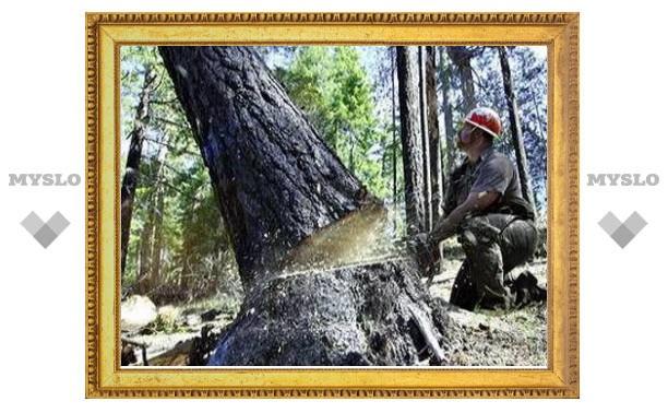 Почему в Туле вырубили деревья?