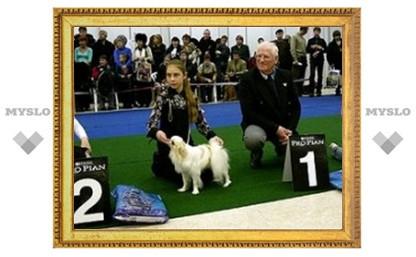 Под Тулой выберут лучшую собаку
