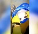 В Туле задержали наркодилера: видео