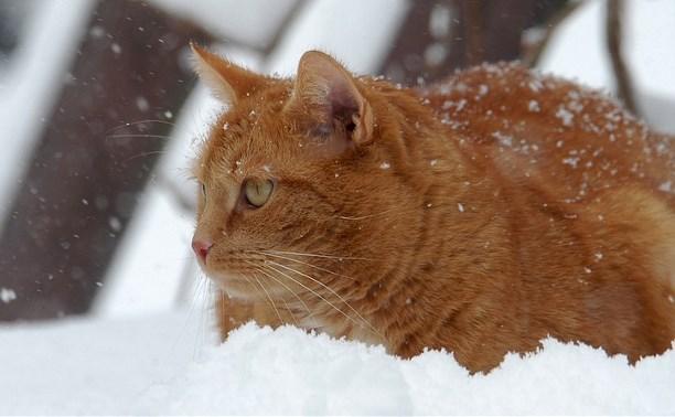 Погода в Туле 15 декабря: мокрый снег и сильный ветер