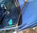 В Туле из-за сильного ветра упало несколько деревьев