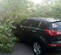 На улице Клары Цеткин в Туле дерево упало на проезжающий автомобиль