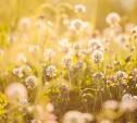 В Тульскую область придет почти майское тепло