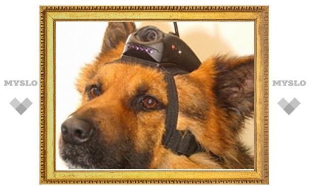 """Израильская """"оборонка"""" выдумала способ дистанционного управления служебными собаками"""