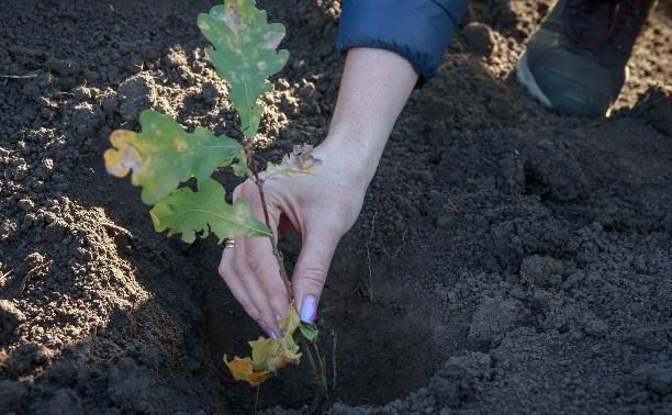 Туляков приглашают восстановить зелёную дубраву на Куликовом поле