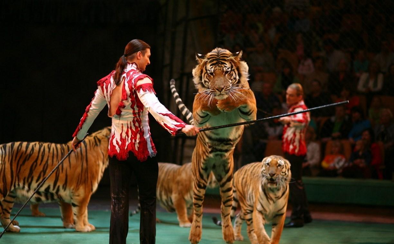 В России предлагают запретить детям ходить в цирк