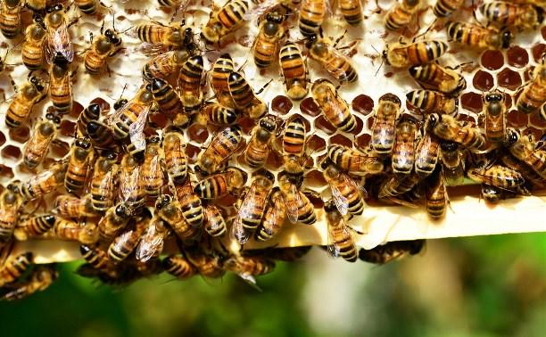 Массовая гибель пчел в Тульской области: пасечникам возместят 20 млн рублей