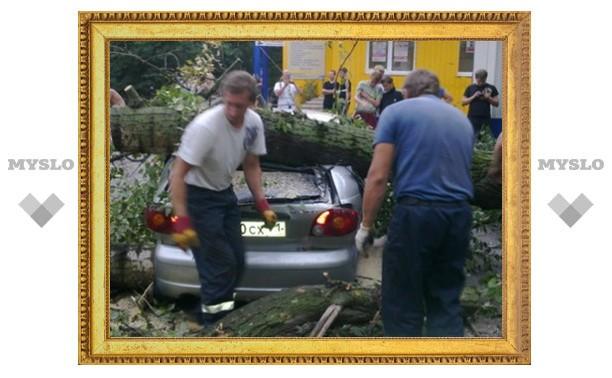 Упавшее дерево придавило «Матиз»