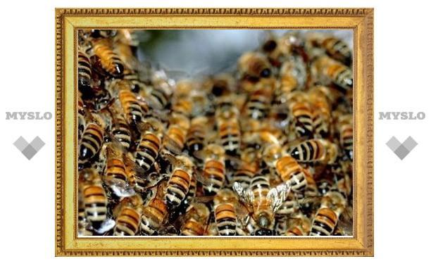 В Туле на детскую площадку сел рой пчел