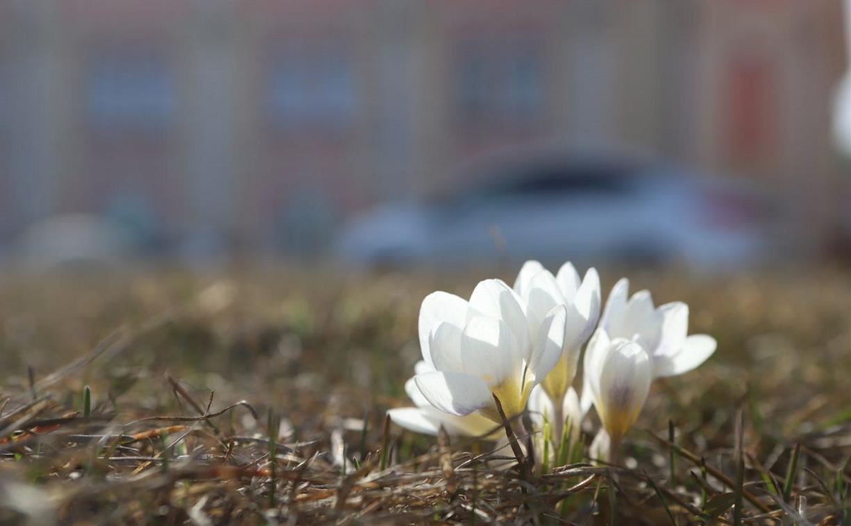 Погода 4 апреля: в Туле солнечно, но местами возможен снег