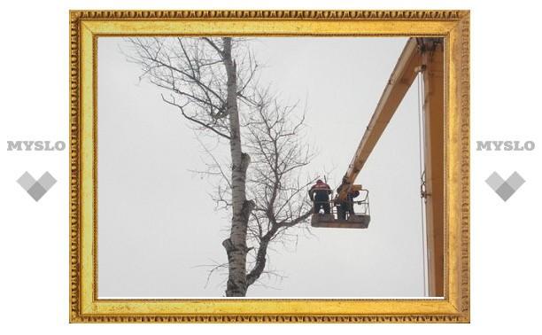 Спилить аварийные деревья жилищников заставила прокуратура