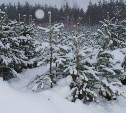 В Тульской области начали бороться с незаконной вырубкой елей