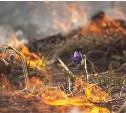 МЧС предупреждает: в области высокая опасность пожаров