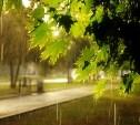 Погода в Туле 4 августа: летнее тепло и небольшой дождь